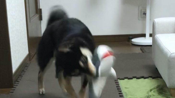 犬もこたつで丸くなる。犬の寒さ対策を紹介します。