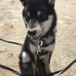 【実体験】犬と一緒に走るメリット。走ることの効果とは。