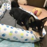 【夏場】ペットの暑さ対策方法と対策グッズ5選!犬にも猫にも有効。