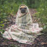 犬のベッド用寒さ対策!ベッドで有効な2つのグッズとは?わずか月150円でペットも快適。